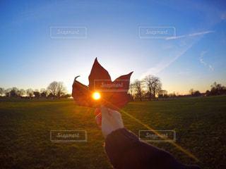芝生のフィールドに沈む夕日の写真・画像素材[754211]