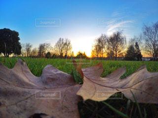 近くの木のアップの写真・画像素材[754238]