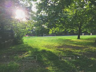 近くに緑豊かな緑のフィールドのの写真・画像素材[762213]