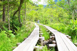 森の横にある木製ベンチ - No.767121