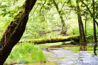 森を流れる川 - No.767126