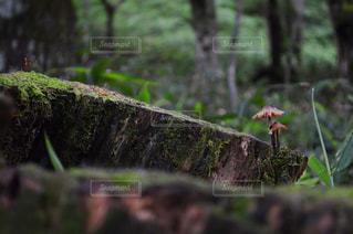 フォレスト内のツリーの写真・画像素材[767248]