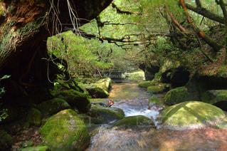森の中の大きな滝の写真・画像素材[767254]