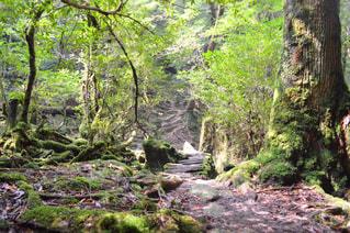 森の中の滝の写真・画像素材[767282]