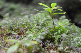 近くにいくつかの茂みのの写真・画像素材[767285]
