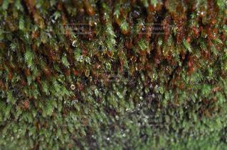 近くの木のアップの写真・画像素材[767291]