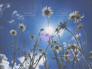 近くの花のアップの写真・画像素材[770125]