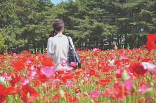 フィールドに赤い花を着ている人の写真・画像素材[770156]