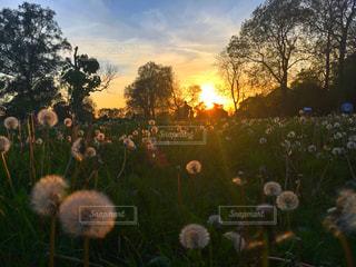 草の上に座っているぬいぐるみのグループ カバー フィールドの写真・画像素材[773736]