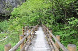 森林の隣に座っている木製のベンチ - No.780146