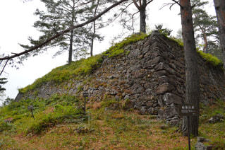 近くの木の横にある丘の中腹 - No.794867