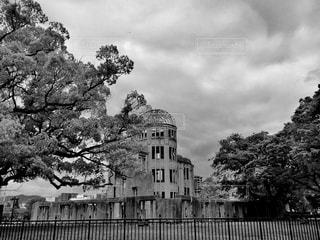 木の黒と白の写真 - No.813614