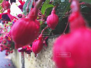 花の写真・画像素材[829570]