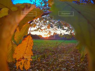 近くの木のアップの写真・画像素材[840480]