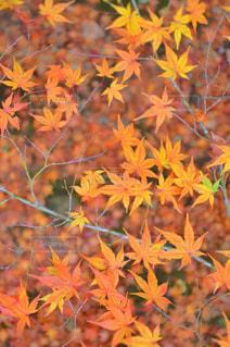 植物の花と木の写真・画像素材[841432]