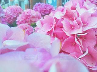 近くの花のアップの写真・画像素材[842466]