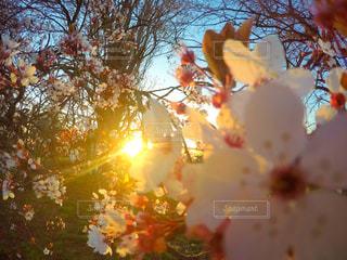 近くの木のアップの写真・画像素材[842473]