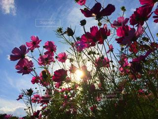 赤い花の上に座っての花で一杯の花瓶の写真・画像素材[842526]