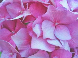 近くの花のアップの写真・画像素材[842629]