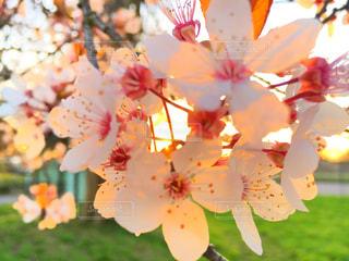 近くの花のアップの写真・画像素材[842713]