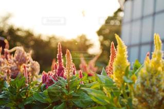 近くの花のアップの写真・画像素材[844083]