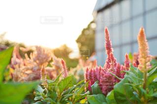 近くの花のアップの写真・画像素材[844085]