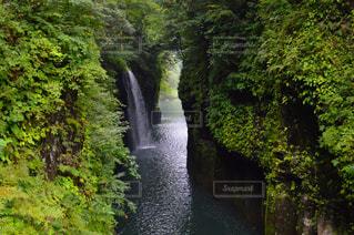 森の狭い川の写真・画像素材[851698]