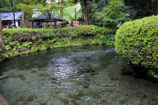 自然,緑,水,新緑,熊本,阿蘇,湧き水