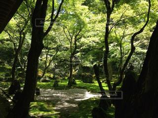 森の大きな木の写真・画像素材[852129]