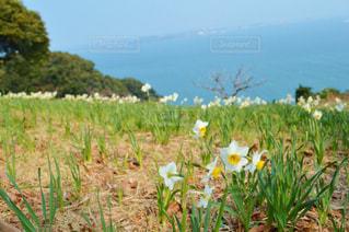 フィールド内の黄色の花 - No.852149
