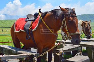 近くに馬のアップ - No.852311