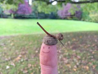 緑の野原にカタツムリを持っている手 - No.867566