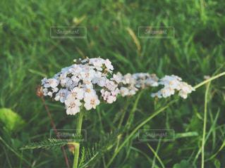 近くの花のアップの写真・画像素材[867850]