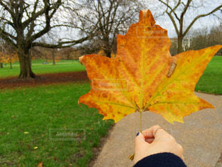 小さなツリーを保持手の写真・画像素材[870449]