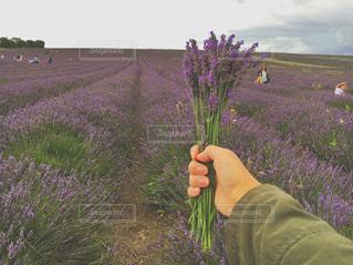 植物を持っている手の写真・画像素材[887556]