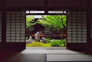 自然,京都,観光,寺,眺め