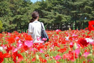赤い花を着ている人の写真・画像素材[1121961]