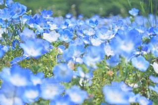 近くの花のアップの写真・画像素材[1121970]