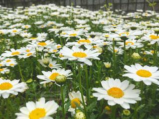 近くの花のアップ - No.1122923