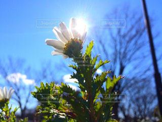近くの花のアップ - No.1132479