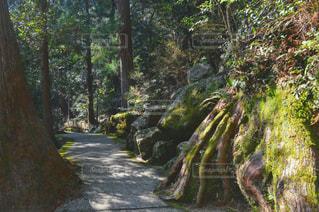 フォレスト内のツリーの写真・画像素材[1158491]