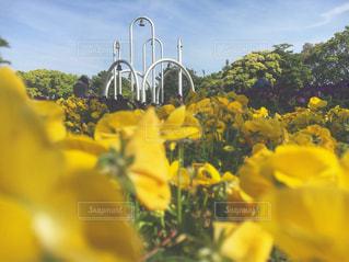 風景,公園,花,カメラ,綺麗,黄色,ピクニック,お洒落,名古屋,愛知