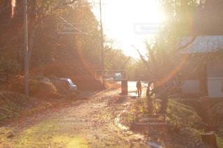自然,空,秋,屋外,太陽,夕暮れ,日光,光,樹木,レンズフレア