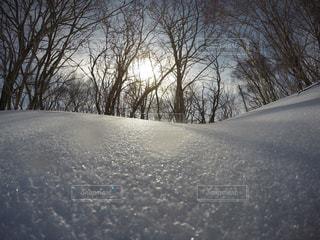 自然,アウトドア,冬,スポーツ,雪,樹木,人物,ゲレンデ,レジャー,斜面