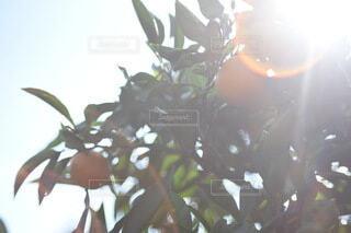 花のクローズアップの写真・画像素材[3889228]