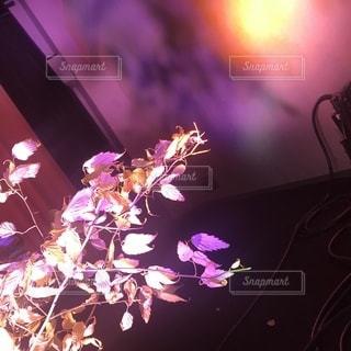 近くにステージ上の花のアップの写真・画像素材[844063]