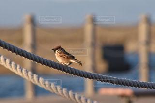 木の棒の上に座って鳥の写真・画像素材[735449]