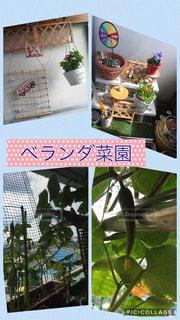 小さな家庭菜園の写真・画像素材[739122]