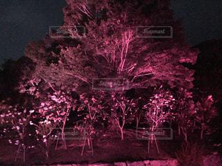 幻想的な樹木の写真・画像素材[1705394]