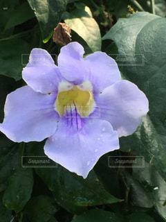 自然,花,紫,水滴,温室,flower,植物園